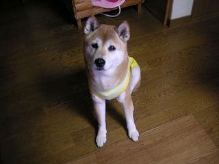 PICT0121-2010-11-24.jpg