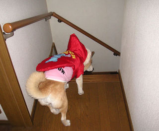 PICT0187--2010-12-17-200.jpg